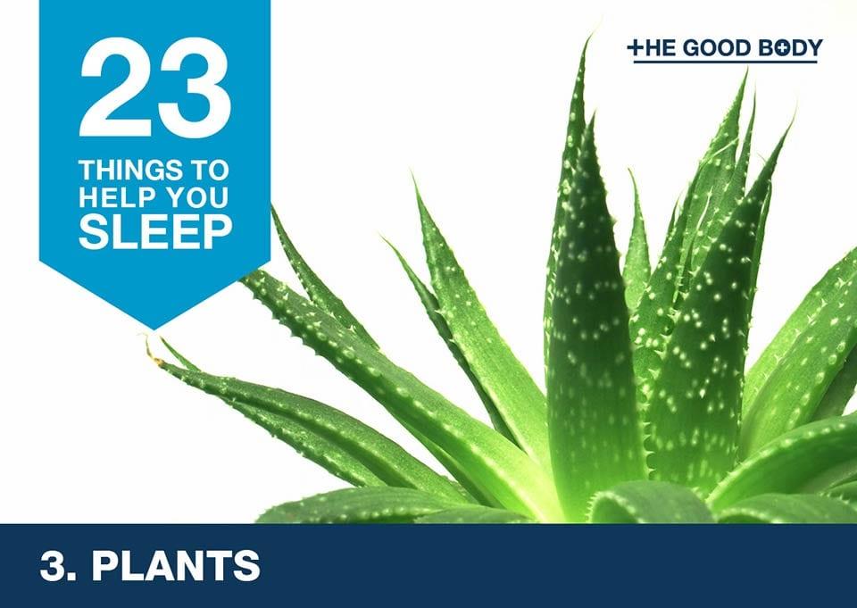 Plants to help you sleep